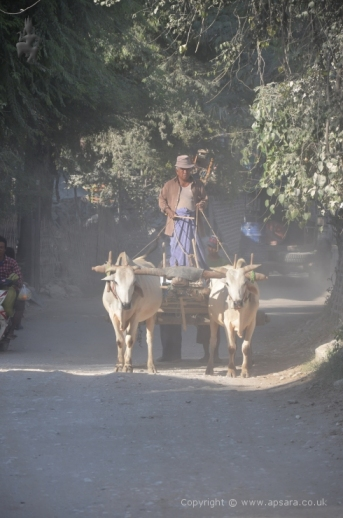 Ox cart in Sagyin - marble village ...